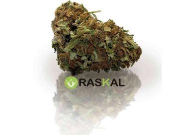 King Haze cannabis light