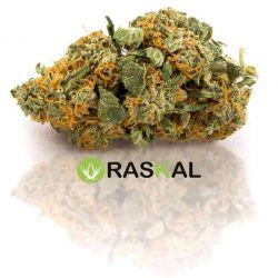 Marijuana Legale Online